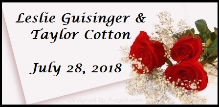 guisinger-cotton.jpg